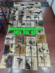 diet-chuot-bay-chuot-tai-nha-chuyen-nghiep