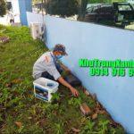 Dịch vụ diệt chuột tại nhà chuyên nghiệp - diệt chuột giá rẻ tại TP HCM