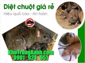 diet-chuot-gia-re-cong-ty-diet-chuot