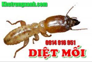 diet-moi-tan-goc-phong-chong-moi-cong-trinh