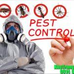 Kiểm soát chuột , khử trùng hàng , phun côn trùng , diệt mối trên toàn quốc