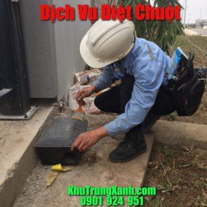 Công ty dịch vụ diệt chuột