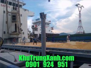 Khử trùng sà lan , tàu biển tại Cảng Phú Mỹ  Vũng Tàu