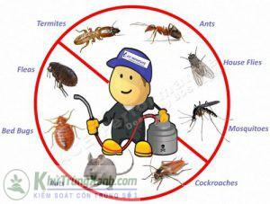 Công ty dịch vụ phun thuốc diệt khuẩn cho nhà , văn phòng , công ty