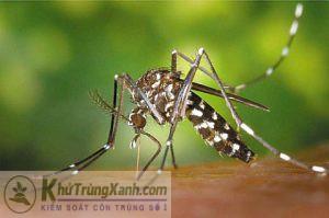 Muỗi Anophel