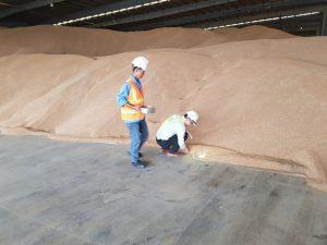 Thuốc diệt mọt nông sản – thuốc diệt mọt kho hàng – Khử Trùng XANH