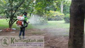 Công ty phun côn trùng tại Bình Định