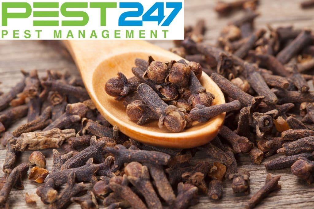 Cách diệt ruồi hiệu quả tại nhà - Đinh hương