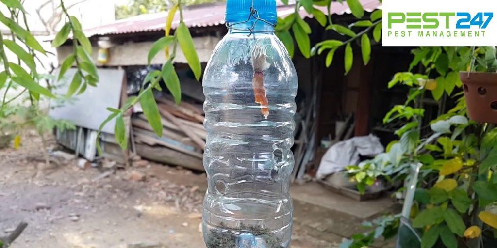 Cách đuổi ruồi - Bẫy chai nhựa