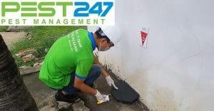 Công ty xử lý côn trùng, dịch hại chuyên nghiệp, hiệu quả tại Bình Phước