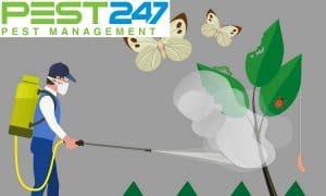 Diệt Côn Trùng Cần Thơ – Công ty diệt côn trùng uy tín Cần Thơ