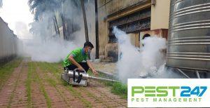 Công ty diệt côn trùng tại Quảng Ninh