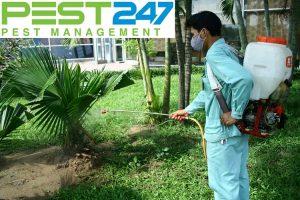 Công ty xử lý côn trùng, dịch hại chuyên nghiệp, hiệu quả tại TP.HCM