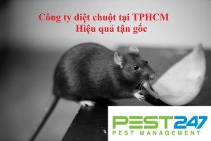 Công ty dịch vụ diệt chuột, kiểm soát chuột hiệu quả, chuyên nghiệp