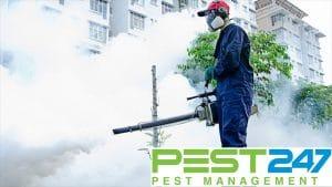 Công ty dịch vụ diệt côn trùng tại Lào Cai