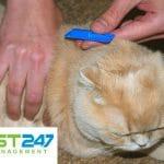 Cách diệt bọ chét cho mèo hiệu quả nhất