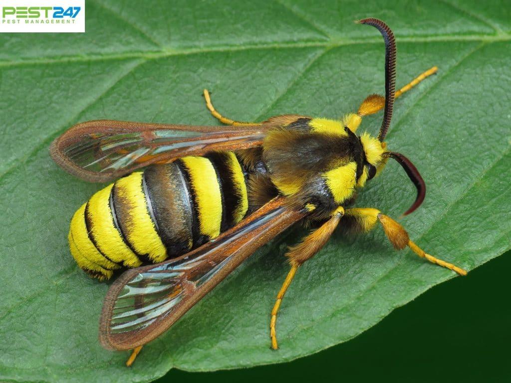 Dịch vụ diệt ong độc tại nhà