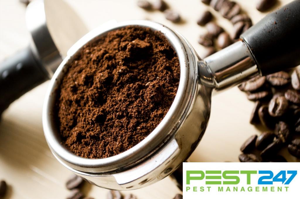 Dùng bã cà phê để diệt kiến