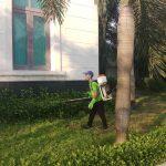 Công ty phun thuốc diệt muỗi chuyên nghiệp tại Hà Nội
