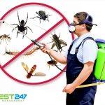 Mẫu hợp đồng cung cấp dịch vụ Diệt côn trùng