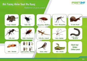 Quy trình diệt và kiểm soát côn trùng