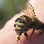Dịch vụ diệt ong độc tại nhà | Công Ty Bắt Ong Chuyên Nghiệp
