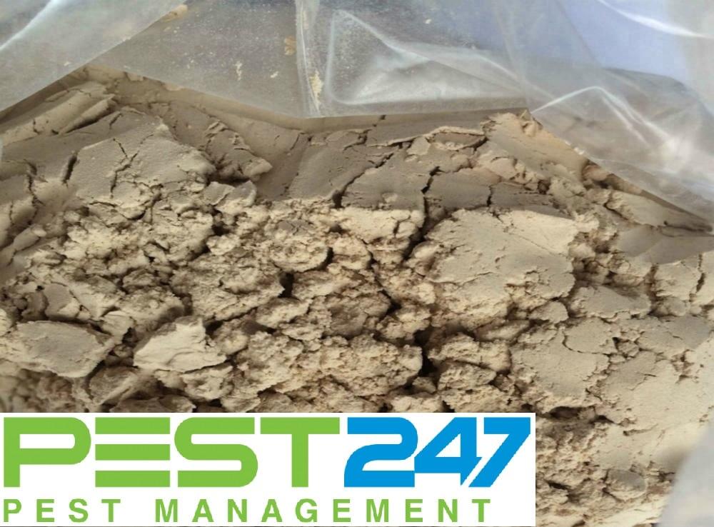 Cách diệt rệp giường - đất diatomite