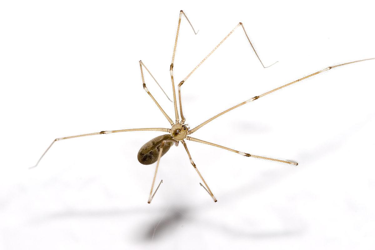 Nhện - Các loài nhện phổ biến hiện nay