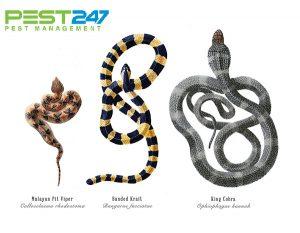 Rắn – Các loài rắn thường gặp ở Việt Nam