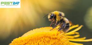 Loài ong – Những điều thú vị về loài ong mà bạn chưa biết