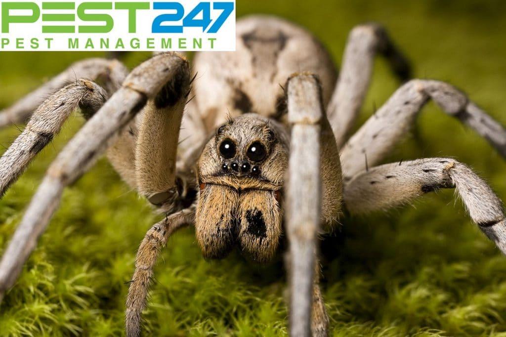 Loài nhện