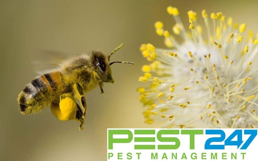 Loài ong