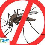 Cách diệt muỗi tự nhiên tại nhà đơn giản và cực kỳ hiệu quả