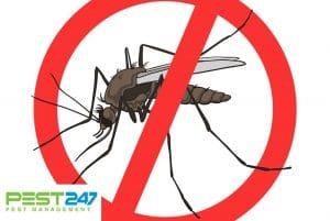 Cách diệt muỗi, đuổi muỗi tự nhiên tại nhà cực kỳ hiệu quả