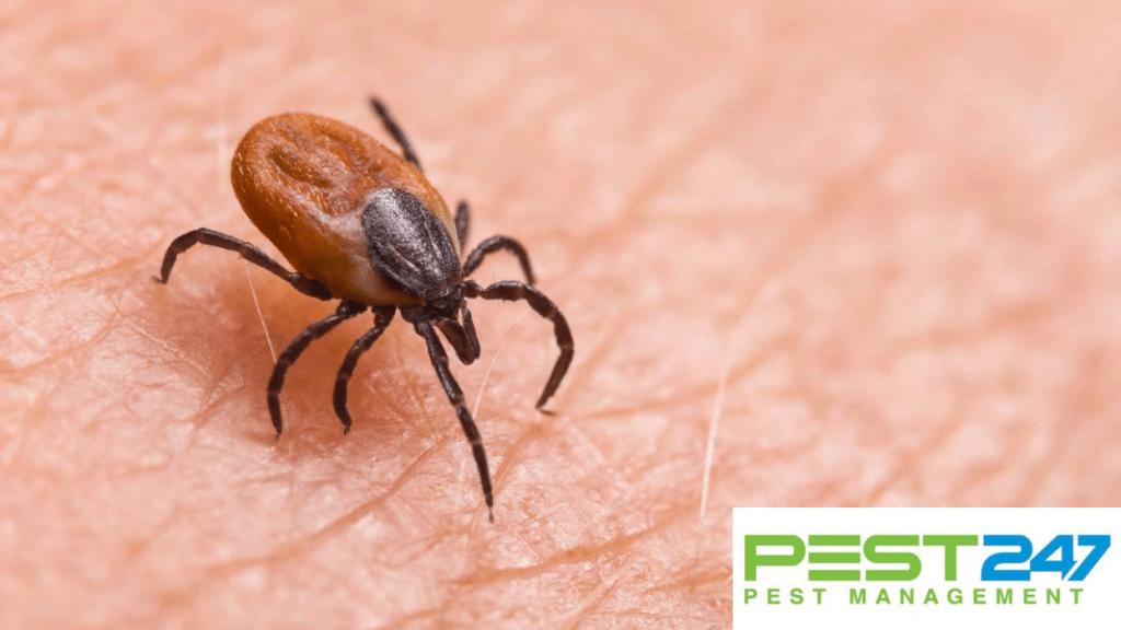 Cách diệt bọ chét cho thú cưng