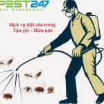 Công ty kiểm soát côn trùng – Dịch vụ diệt côn trùng hiệu quả, uy tín