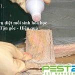 Công ty diệt mối, trừ mối sinh hóa học an toàn tại TPHCM
