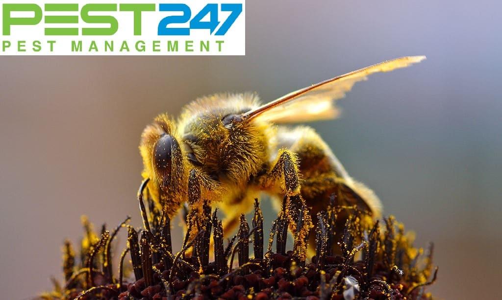 Vòng đời của ong