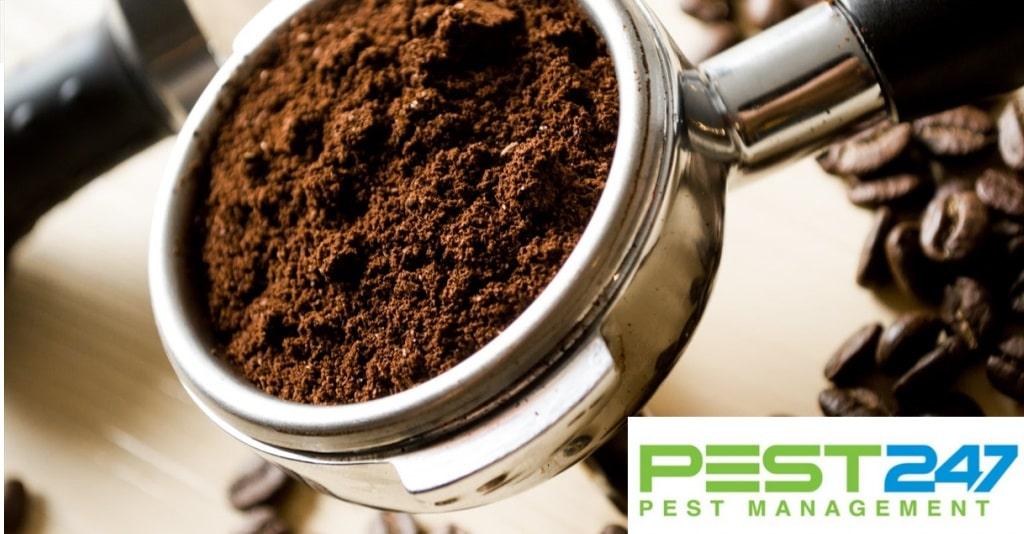 Cách diệt gián trong phòng trọ bằng bã cà phê