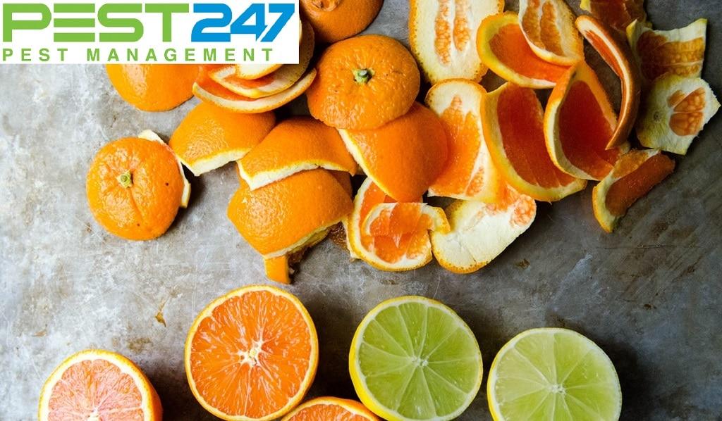 Cách diệt gián trong phòng trọ bằng vỏ cam