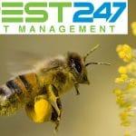 Ong chúa – Những điều thú vị xung quanh ong chúa