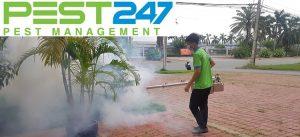 Công ty diệt côn trùng hiệu quả tại Vũng Tàu