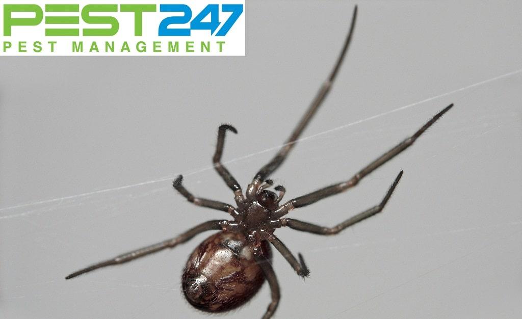 Loài nhện - 2