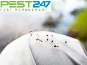 Muỗi có lợi ích gì đối với môi trường?