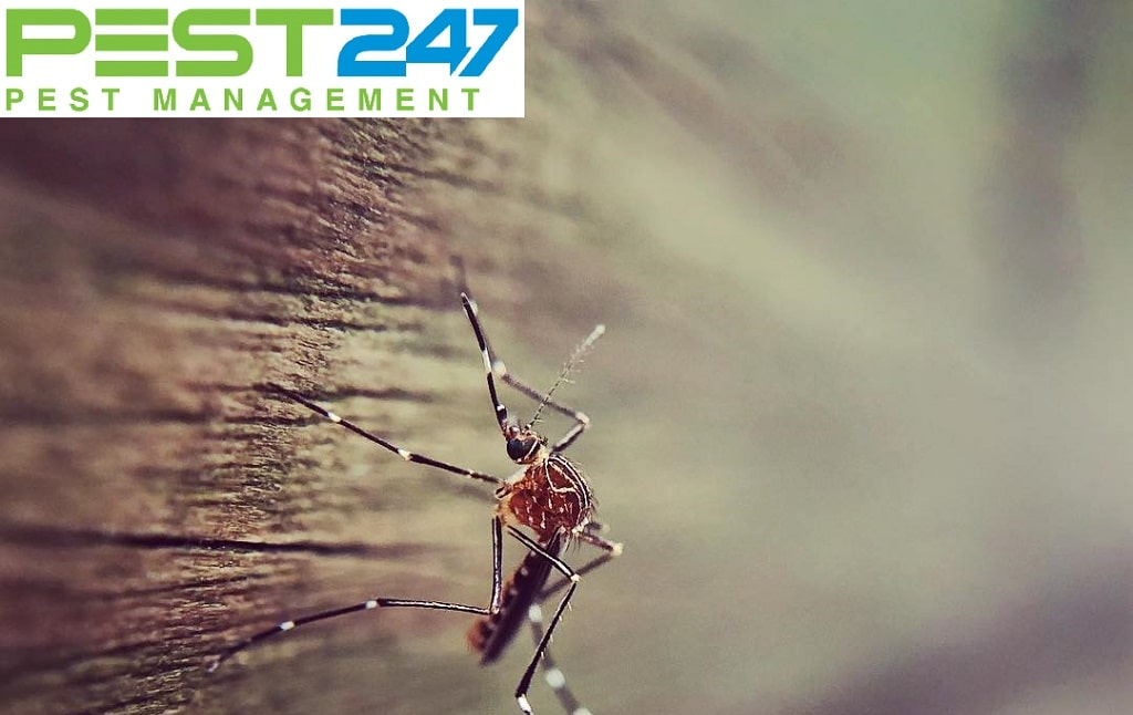 Lợi ích của muỗi