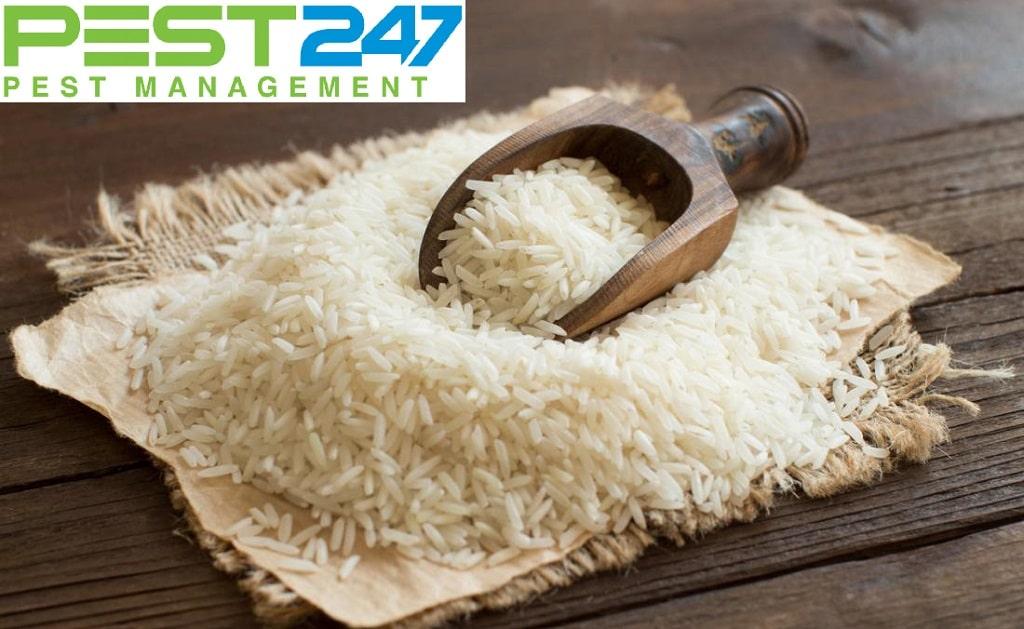 Một gạo 1