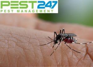 Nguyên nhân nhà nhiều muỗi? Làm sao để xua đuổi muỗi khỏi nhà