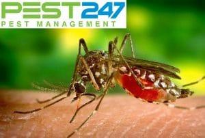 Vòng đời của muỗi, tập tính của muỗi