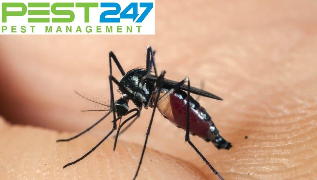 Tập tính của muỗi