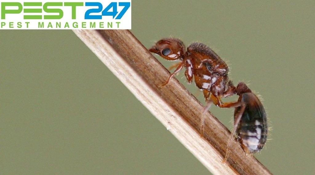 Tập tính thói quen của loài kiến